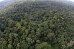 Borneo rainforest -- sabah_aerial_2518