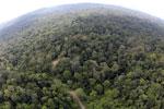 Borneo rainforest -- sabah_aerial_2519