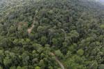 Borneo rainforest -- sabah_aerial_2521