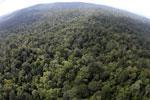 Borneo rainforest -- sabah_aerial_2522