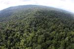 Borneo rainforest -- sabah_aerial_2523