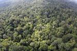 Borneo rainforest -- sabah_aerial_2524