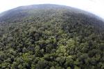 Borneo rainforest -- sabah_aerial_2525