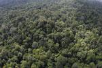 Borneo rainforest -- sabah_aerial_2526