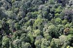 Borneo rainforest -- sabah_aerial_2527