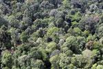 Borneo rainforest -- sabah_aerial_2528