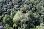 Borneo rainforest -- sabah_aerial_2529