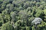 Borneo rainforest -- sabah_aerial_2533