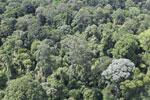 Borneo rainforest -- sabah_aerial_2534