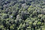 Borneo rainforest -- sabah_aerial_2535