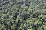 Borneo rainforest -- sabah_aerial_2536
