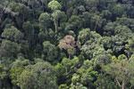 Borneo rainforest -- sabah_aerial_2538