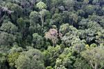 Borneo rainforest -- sabah_aerial_2539