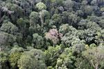 Borneo rainforest -- sabah_aerial_2541