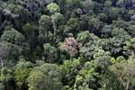 Borneo rainforest -- sabah_aerial_2542