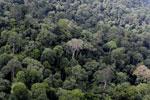Borneo rainforest -- sabah_aerial_2543