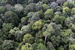Borneo rainforest -- sabah_aerial_2544