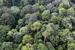 Borneo rainforest -- sabah_aerial_2545