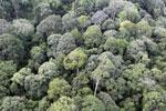 Borneo rainforest -- sabah_aerial_2548