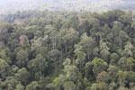 Borneo rainforest -- sabah_aerial_2549