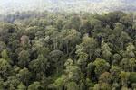 Borneo rainforest -- sabah_aerial_2550