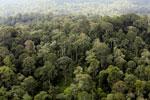 Borneo rainforest -- sabah_aerial_2551