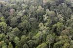 Borneo rainforest -- sabah_aerial_2553