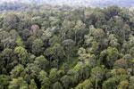 Borneo rainforest -- sabah_aerial_2554