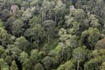 Borneo rainforest -- sabah_aerial_2555