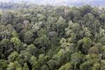 Borneo rainforest -- sabah_aerial_2556