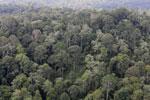 Borneo rainforest -- sabah_aerial_2557