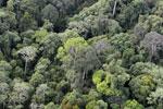 Borneo rainforest -- sabah_aerial_2558