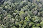 Borneo rainforest -- sabah_aerial_2559