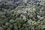 Borneo rainforest -- sabah_aerial_2560