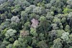 Borneo rainforest -- sabah_aerial_2561