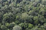 Borneo rainforest -- sabah_aerial_2564