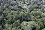 Borneo rainforest -- sabah_aerial_2565