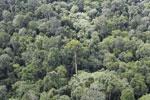 Borneo rainforest -- sabah_aerial_2566