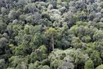 Borneo rainforest -- sabah_aerial_2567
