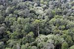 Borneo rainforest -- sabah_aerial_2568