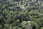 Borneo rainforest -- sabah_aerial_2569