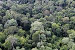 Borneo rainforest -- sabah_aerial_2570