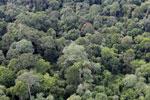 Borneo rainforest -- sabah_aerial_2572