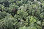 Borneo rainforest -- sabah_aerial_2574
