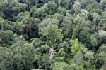 Borneo rainforest -- sabah_aerial_2575
