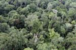 Borneo rainforest -- sabah_aerial_2576