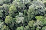 Borneo rainforest -- sabah_aerial_2577