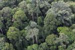Borneo rainforest -- sabah_aerial_2578