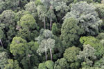 Borneo rainforest -- sabah_aerial_2579
