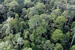 Borneo rainforest -- sabah_aerial_2582